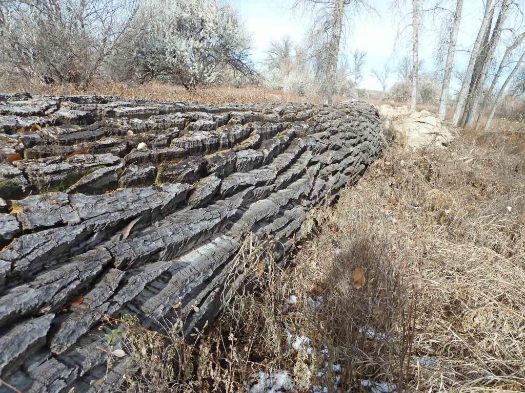 33-Fallen-tree-new-001